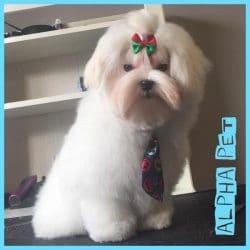 frizerie-canina-primavara